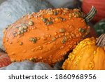 A Group Of Gourds Together In A ...