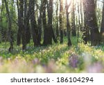 Beautiful Wild Flowers In The...