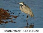 black headed heron  ardea...   Shutterstock . vector #186111020
