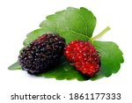 Isolated Mulberry. Two Organic...