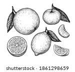 orange  lemon and tangerine... | Shutterstock .eps vector #1861298659