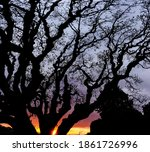 Branches Of A Tree Against The...
