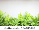 green leaf on white wall | Shutterstock . vector #186186440