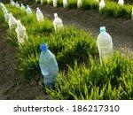 vegetable beds with plastic...   Shutterstock . vector #186217310
