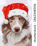 Border Collie In A Santa Claus...