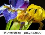 Iris  Fleur De Lis  Flower De...