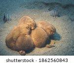 Prairie Dogs Gathering To Warm...