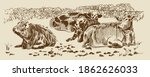 Cows In Field With Dry Stone...