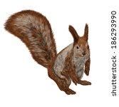 Vector Squirrel Realistic...