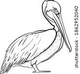 Pelican Bird Line Art Drawing...