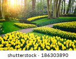 Spring Landscape With Yellow...
