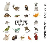 Stock photo poster of pets in english 186319910
