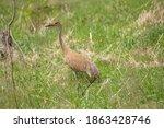 Beautiful Sandhill Cranes...
