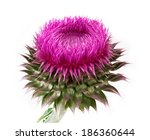 Spiny Flower Isolated On A...