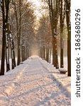 Long Tree Lined Road In Snowy...