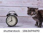 Cute Gray Tabby Kitten And...