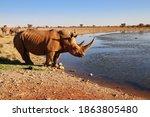 White Rhino At The Waterhole  ...
