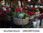 Baskets With Red Cyclamen...