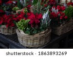 Basket With Red Cyclamen...