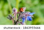 Ladybird Or Ladybug Seats On...