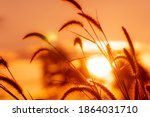 Meadow Grass Flower With...