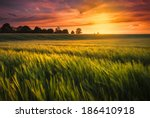 Sunset Over A Ripening Wheat...