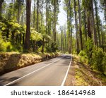 towering trees and tree ferns...   Shutterstock . vector #186414968