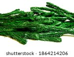 Green Branches Of An Artificial ...