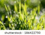 beautiful nature background.... | Shutterstock . vector #186422750