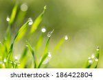 dew drops on the green grass.... | Shutterstock . vector #186422804