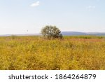 Dried Vegetation In A Hot...