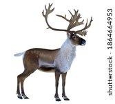 Caribou Buck 3d Illustration  ...