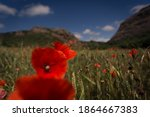 Poppy Field In The Middle Of A ...