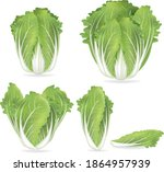 chinese cabbage on a white... | Shutterstock .eps vector #1864957939