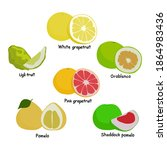 set of citrus fruits  citrus... | Shutterstock .eps vector #1864983436
