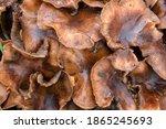Close Up Of Wet Mushrooms...