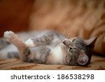 Stock photo the gray cat with green eyes lies on a sofa 186538298