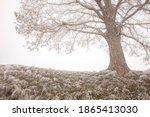 Lonley Tree In The Mist Close...