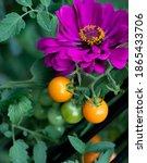 Companion Planting Of Amethyst...