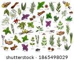 spices  herbs  seasonings... | Shutterstock .eps vector #1865498029