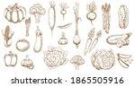 fresh farm vegetable vector... | Shutterstock .eps vector #1865505916