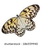 Idea Leuconoe Butterfly...