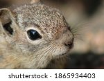 A Little Chipmunk  Also Known...