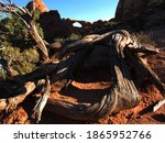 An Old  Twisted  Dead Utah...