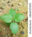 Small photo of Yank wild plants growing above the ground