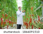 Wide Shot Of Food Scientist...