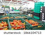 Ripe Vine Tomatoes In Baskets...