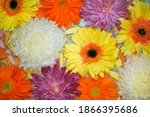 Closeup Of Colorful Flowers...