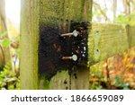 Broken Wooden Hand Rail With...