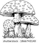 Mushrooms Vintage Sketch Screen ...
